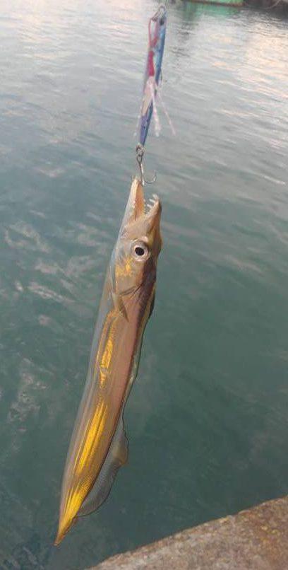 小太刀魚の効率良い釣り方。