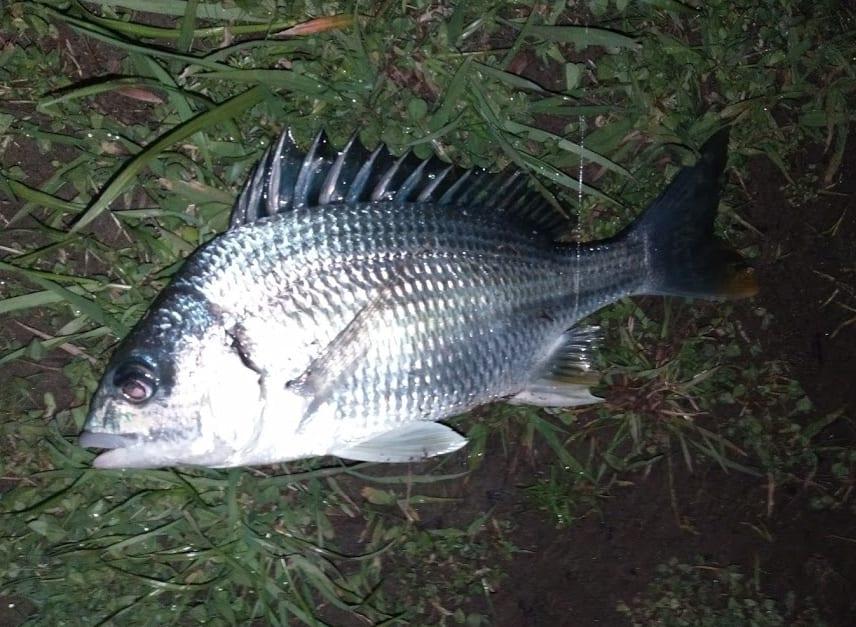 なぜか毎度1匹しか釣れないチニング  in 大淀川(2019/3/28)