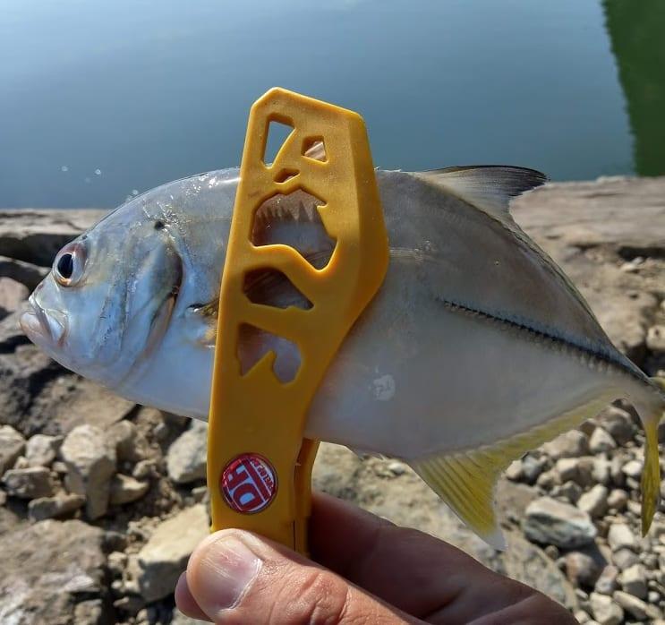 1日数十匹釣れる、マイクロワインドでメッキを釣るコツのご紹介